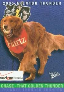 dogcard5chase